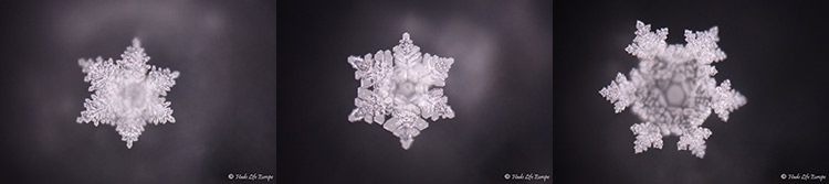 Masaru Emoto pictures of water crystals treated with AQwaVit Water Vitaliser